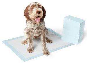 tapis éducateur pour chien